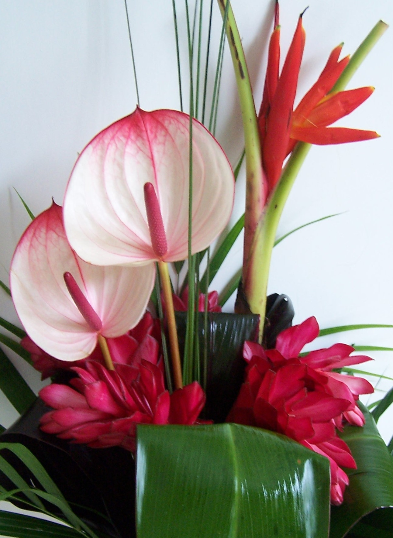 Exotic Tropical Flowers   The London Flower Lover