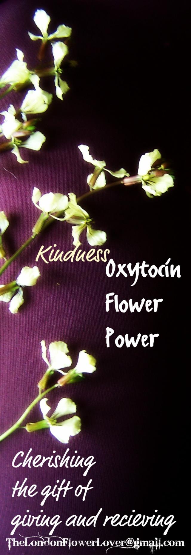 kindness oxytocin spring 2012 flowers 028