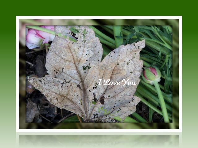 i love you green leaf