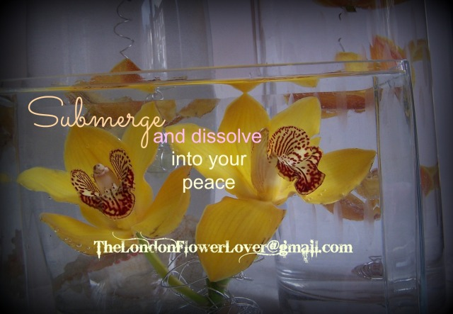 submerge into peace the london flower lover cymbidium orchid