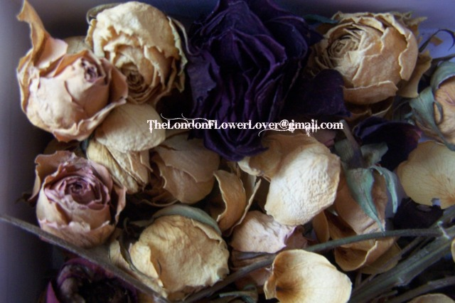 the london flower lover dried roses sekert