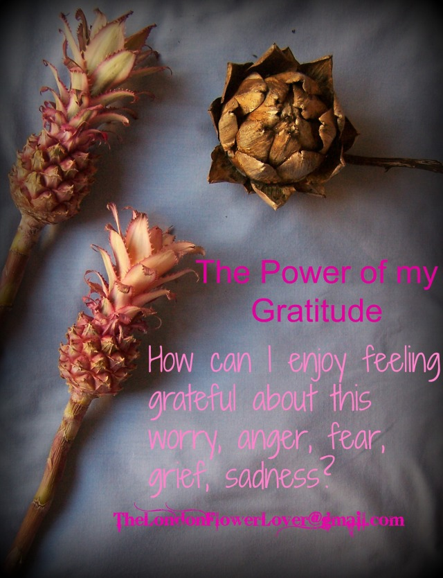 The London Flower Lover the power of gratitude