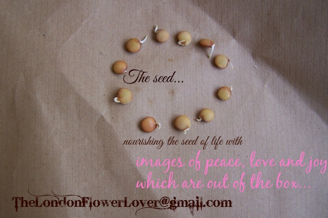 the london flower lover the seed nourished with the environment of peace, love and joy
