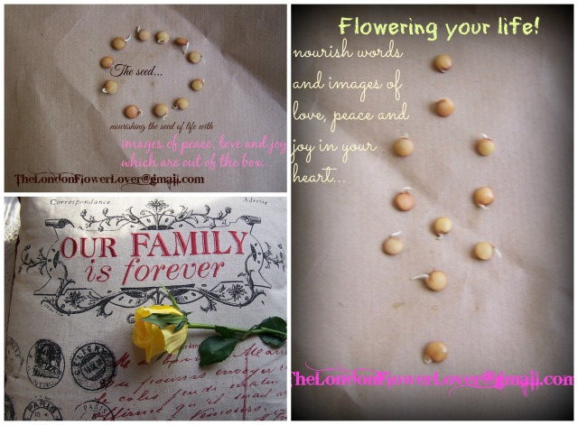 thelondonflowerlover the seed and the family flower your life Collage