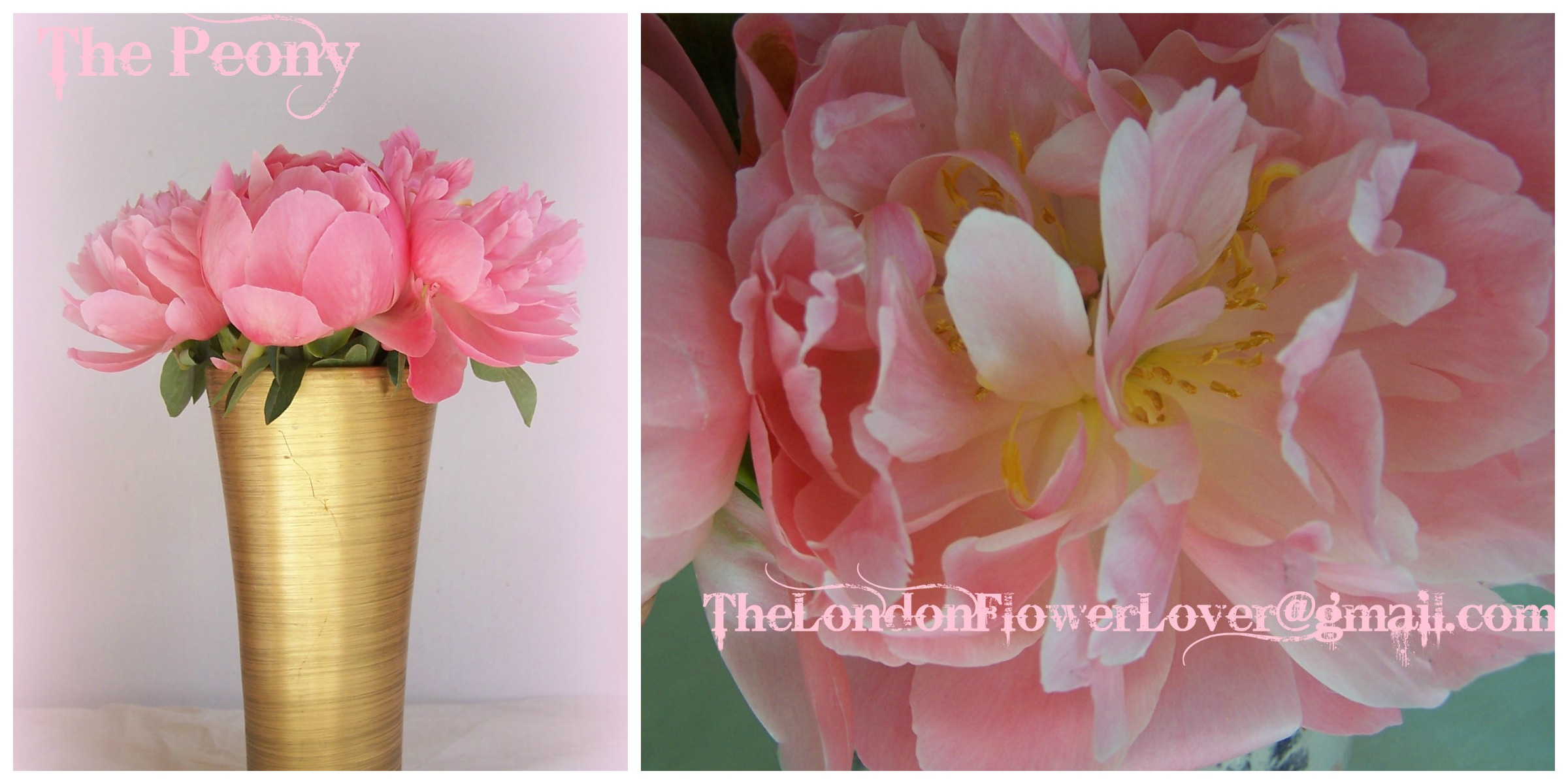 The Bride of Wedding flowers is here: The Peony flower means