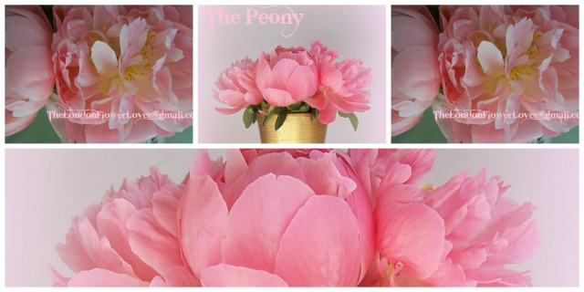 Peony The London Flower Lover