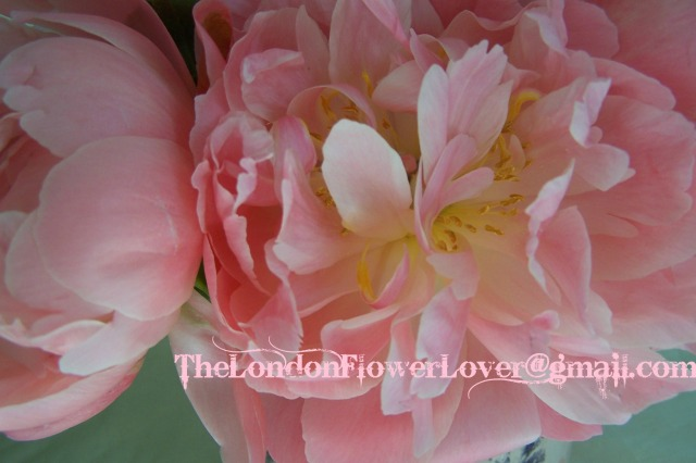 The Peony The London Flower Lover