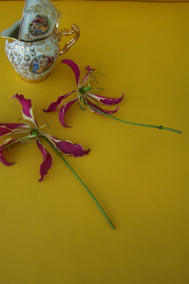Gloriosa The London Flower Lover