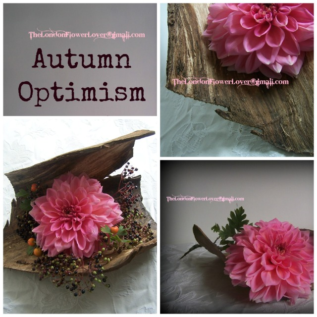 The Lodnon Flower Lover Autumn Optimism Collage