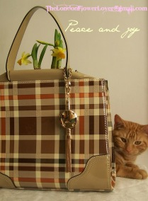 daffodil in bag with cat