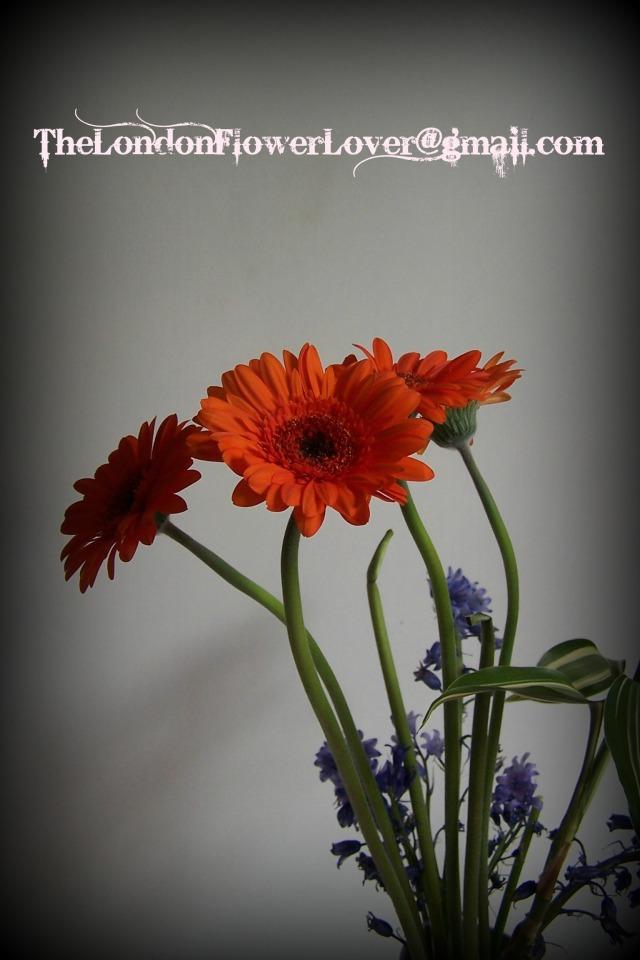 gerbera vase thelondonflowerlover