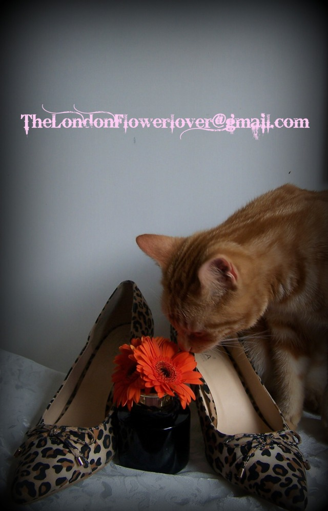 the cat the flower the shoes thelondonflowerlover