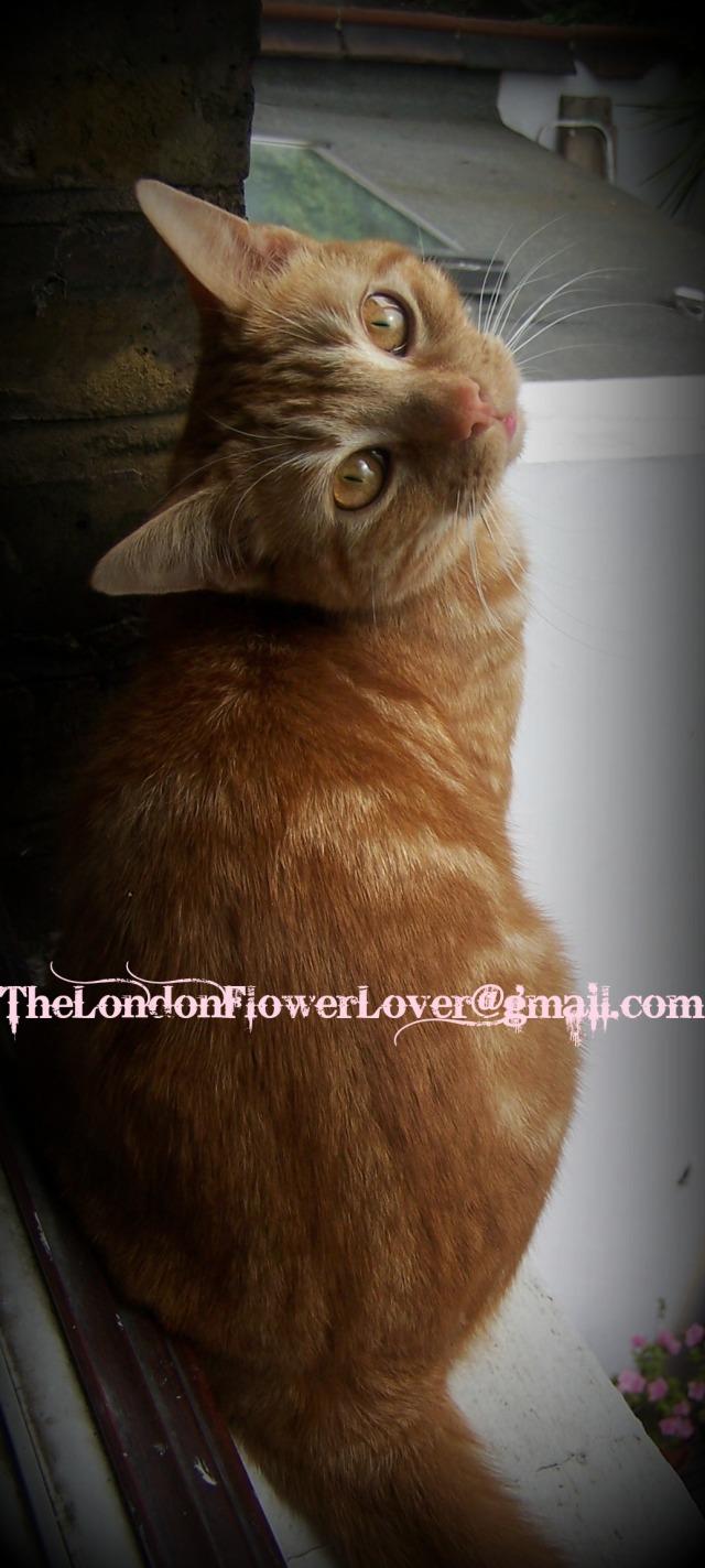 Tootsie Rose Thelondonflowerlover