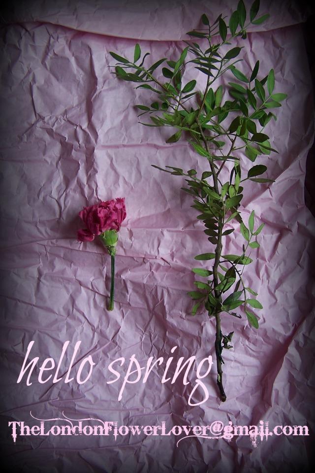 hello spring the london flower lover