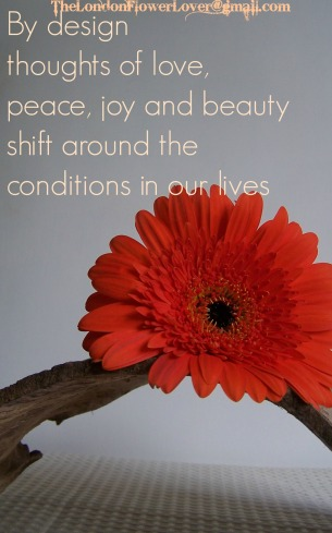 Shift around our lives Orange Gerbera and wood flowers The London Flower Lover
