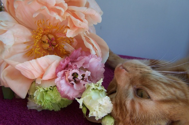 Peony and Tootsie the cat The London Flower Lover