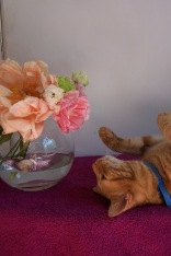 The London Flower Lover flowers and tootsie the cat