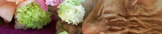 cropped-flowers-tootsie-cat-the-london-flower-lover.png