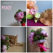 restore with flowers and a cat Collage