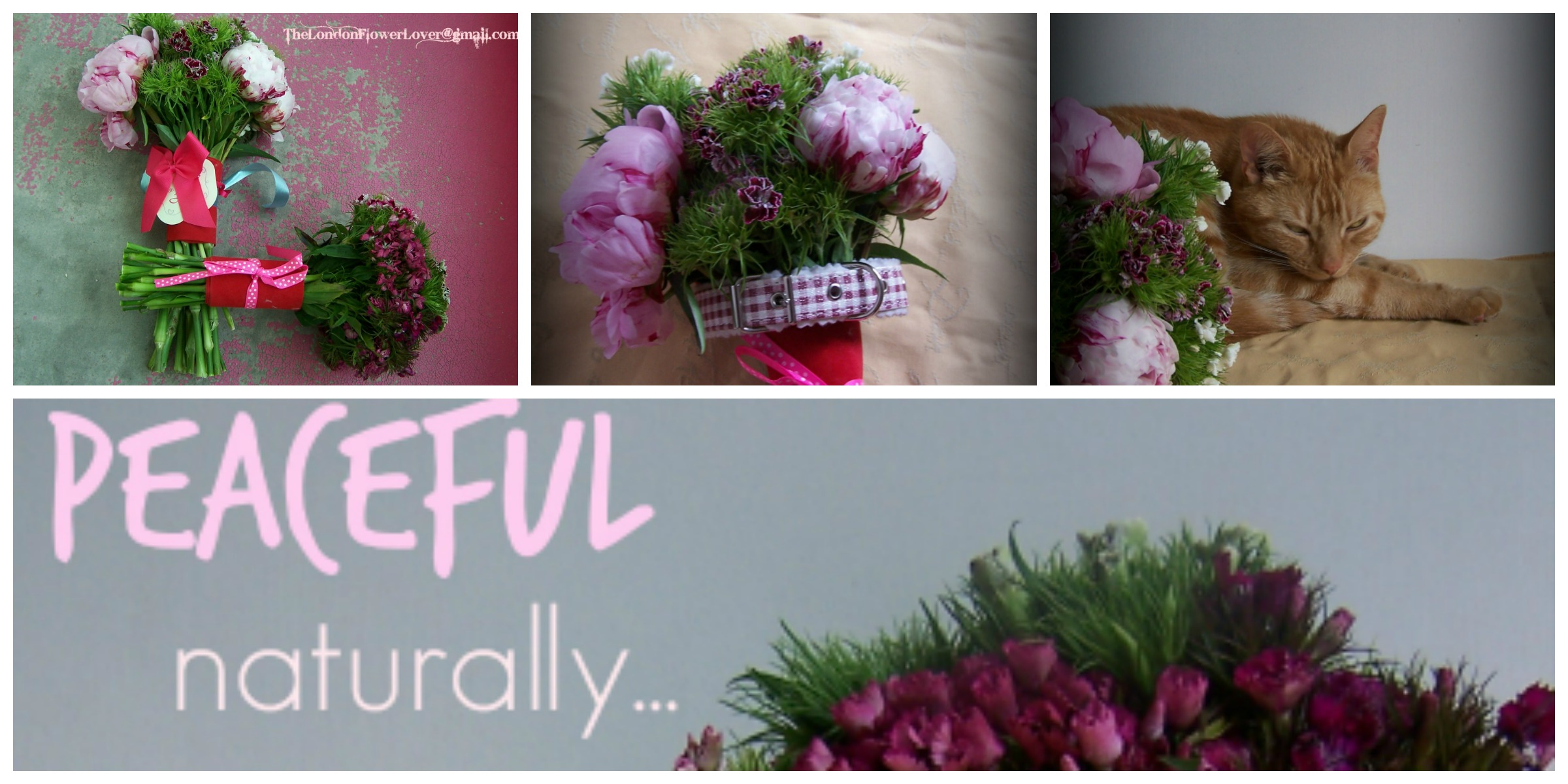 Sweet William And Peony Bouquet And Cat Collage The London Flower
