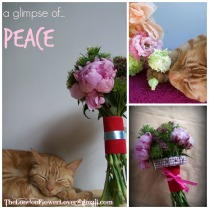 Recharge restore and renew with flowers and a cat