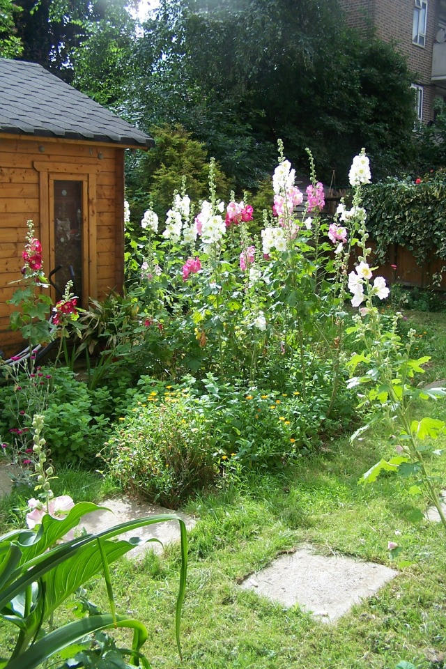 Summer garden the london flower lover