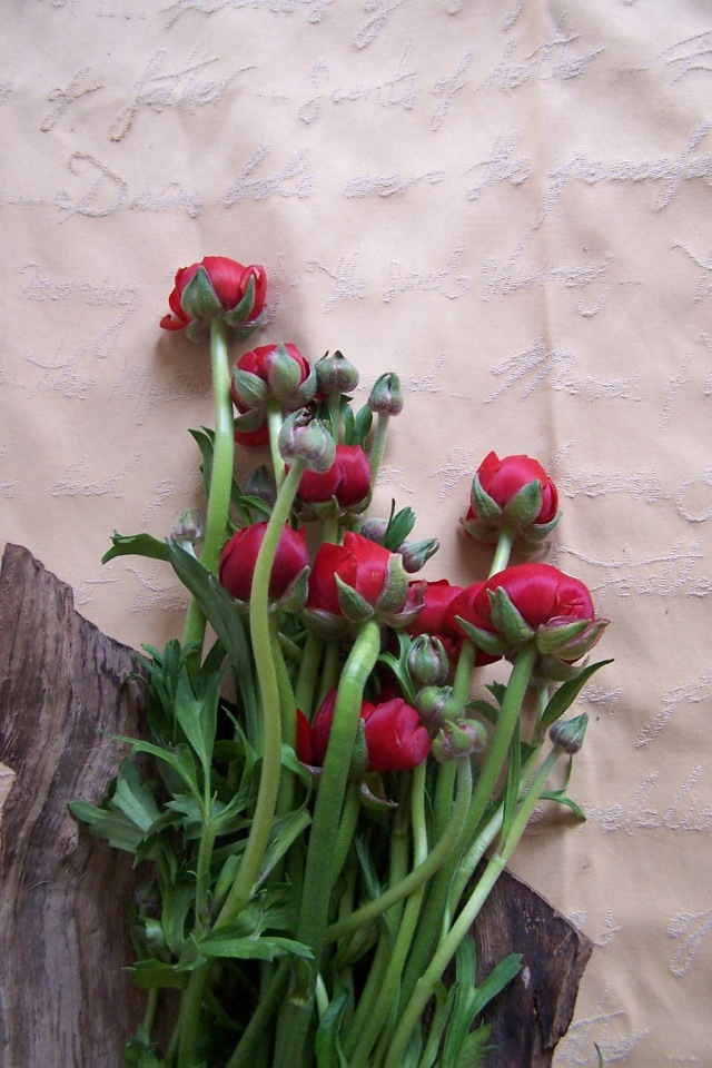 thelondonflowerlover 476