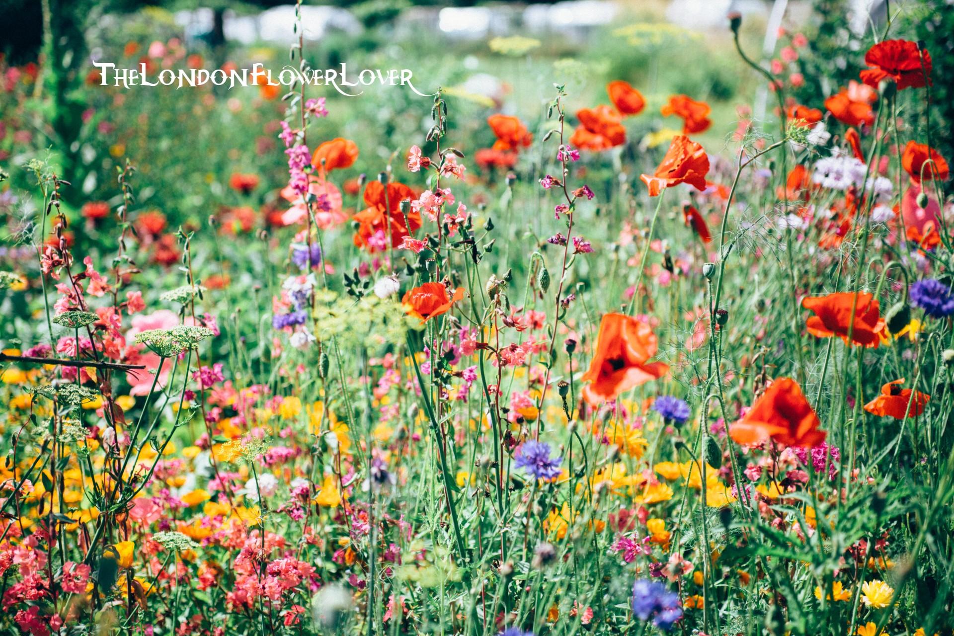 Garden the london flower lover