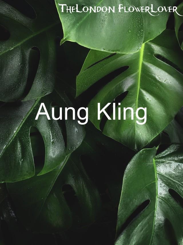 Aung kling