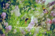 garden the london flower lover aung shring