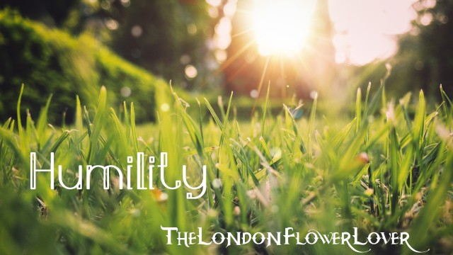 humility the london flower lover
