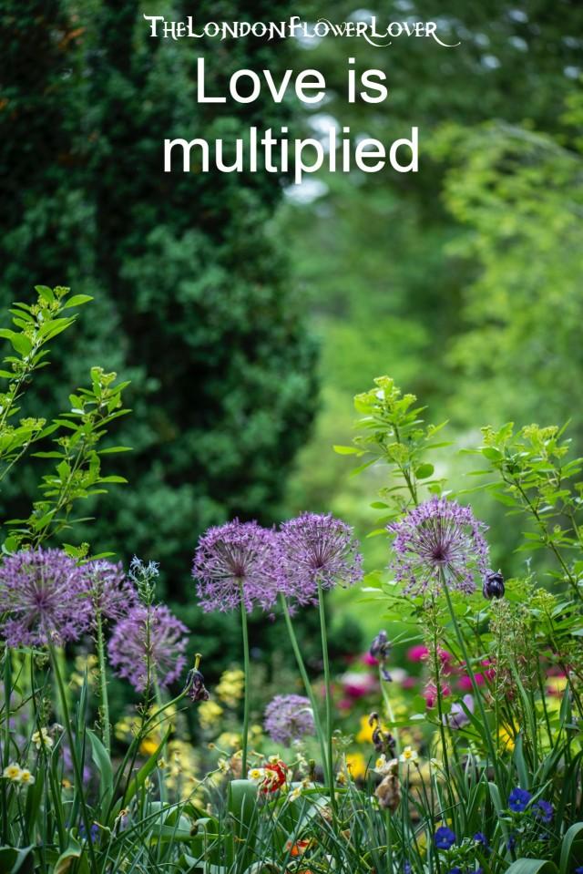 love is multipled the london flower lover